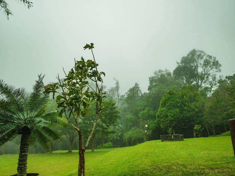 Campo verde para acampar con la niebla en el parque nacional de Ramkhamhaeng de la montaña de Khao Luang en día lluvioso imagen de archivo