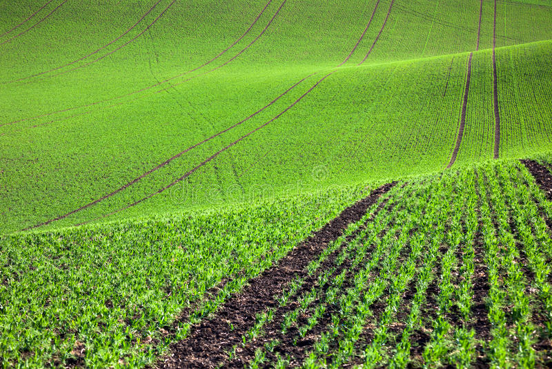 Campo verde pastoral em montes bonitos, fundo abstrato imagem de stock royalty free