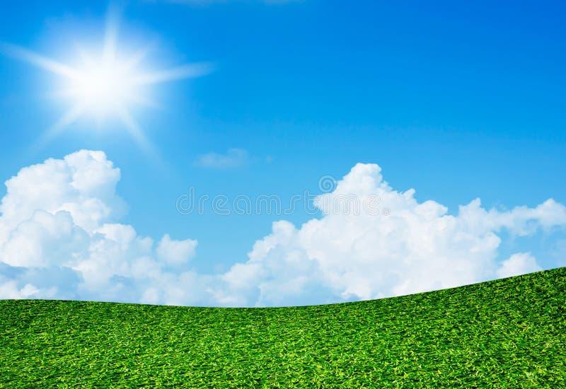 Campo verde sob o céu azul e o sol foto de stock