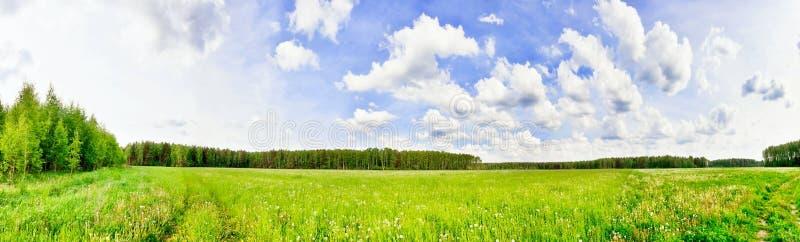 Campo verde sotto cielo blu immagini stock