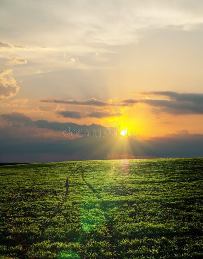 Campo verde sul tramonto fotografie stock libere da diritti