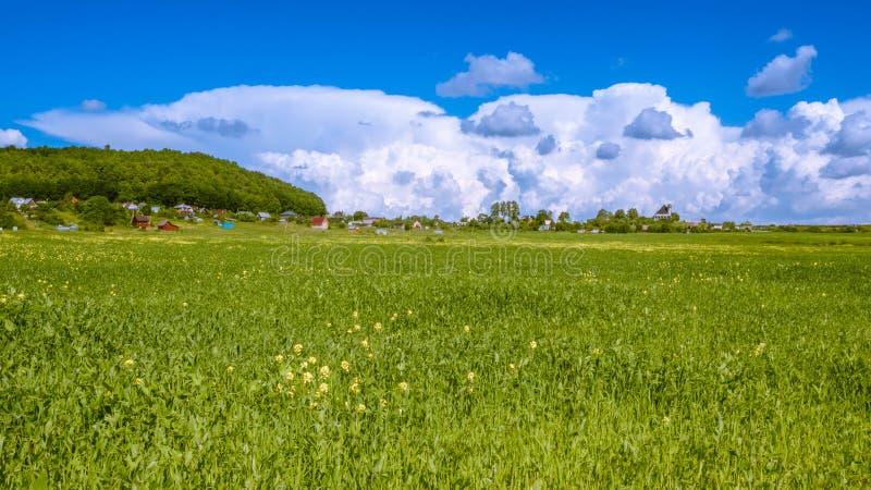Campo verde un giorno soleggiato immagine stock