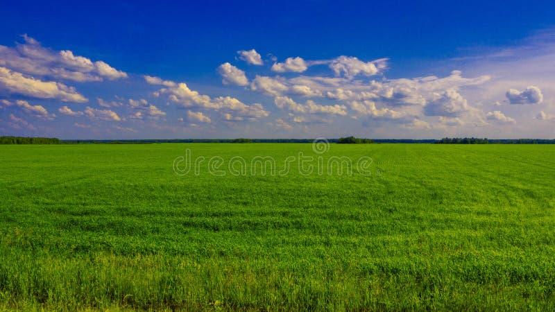 Campo verde un giorno soleggiato immagini stock