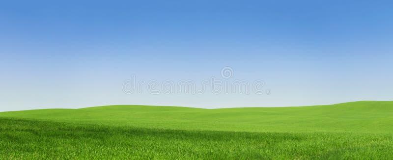 Campo verde vazio foto de stock