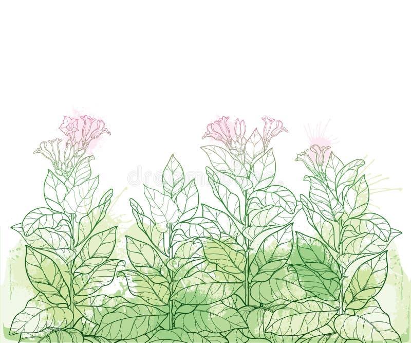Campo vetorial com contorno da planta tóxica do Cigarro ou do bando de flores de Nicotiana, gola e folha em verde pastel sobre fu ilustração stock