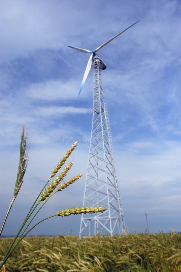 Campo Wheaten com um moinho de vento imagens de stock