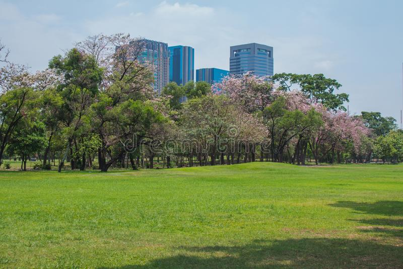 Campo y árboles verdes del prado de la hierba del césped en parque público con los edificios de la ciudad en el fondo fotos de archivo
