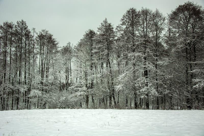 Campo y bosque cubiertos con nieve imagen de archivo libre de regalías