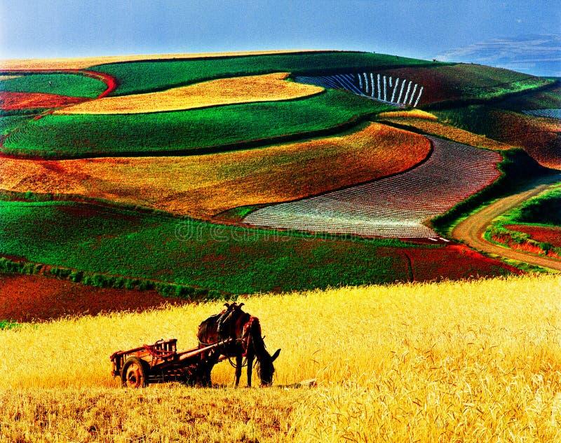 campo y caballo coloridos del otoño fotografía de archivo libre de regalías