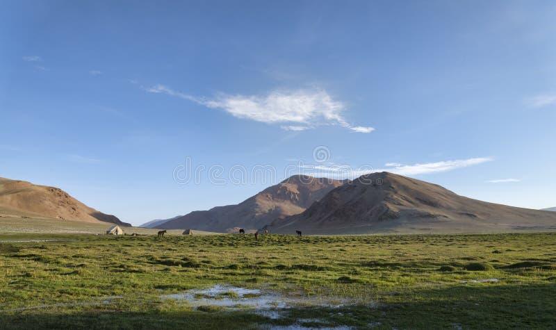 Campo y caballos en montañas fotografía de archivo
