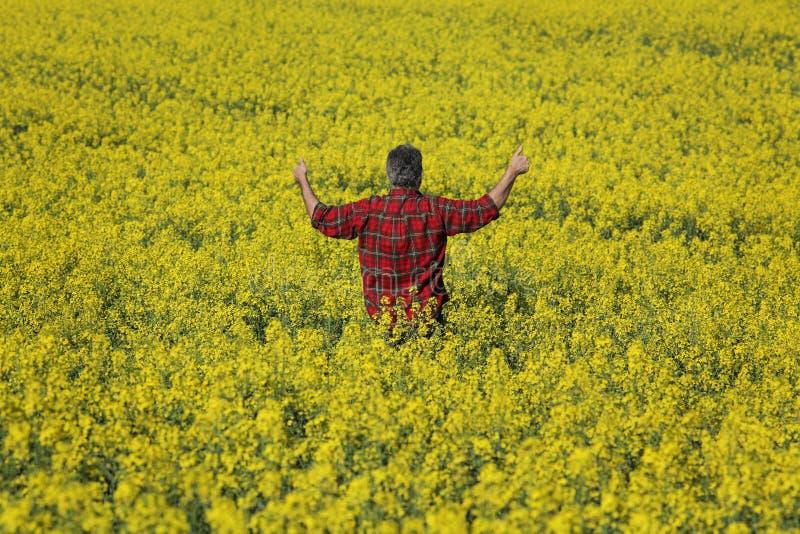 Campo y el gesticular florecientes de examen de la rabina del granjero fotografía de archivo libre de regalías