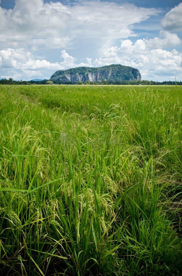 Campo y montaña de Padi imagen de archivo libre de regalías
