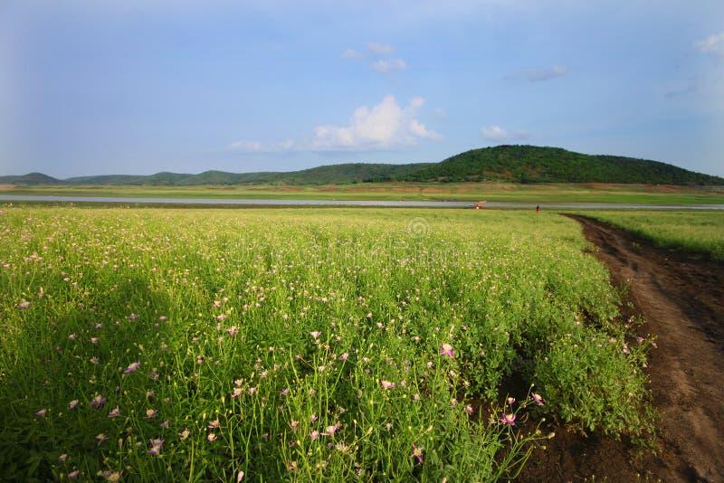 Campo y prados de flor salvaje en Telangana foto de archivo