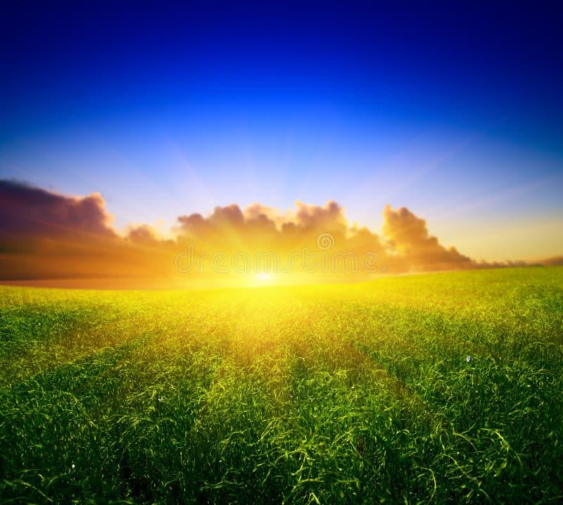 Campo y puesta del sol fotografía de archivo libre de regalías