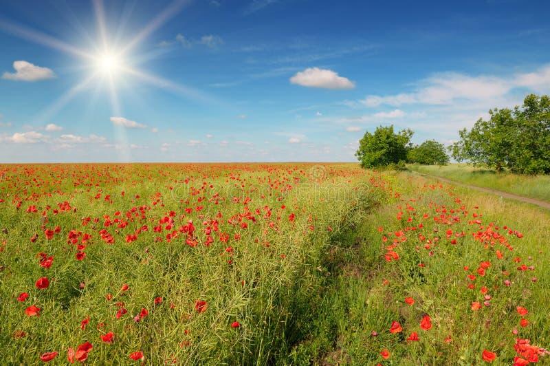 Campo y sol en el cielo azul imagen de archivo