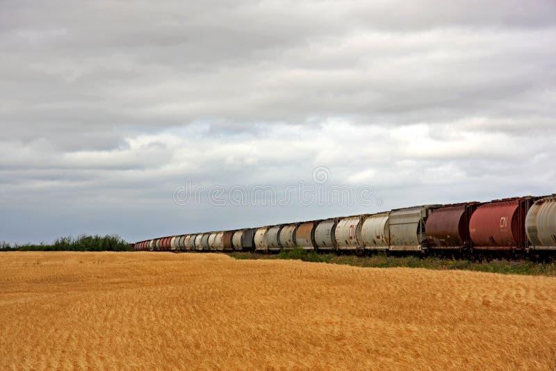 Campo y tren de trigo foto de archivo libre de regalías