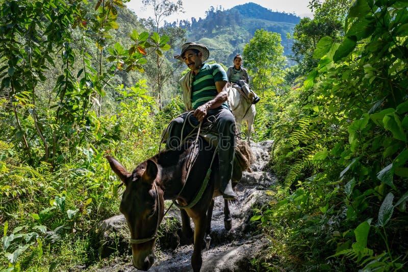 Camponês e seu filho andando nas montanhas colombianas fotos de stock royalty free