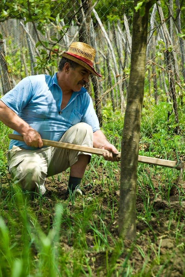 Camponês que trabalha sua terra com cebola imagem de stock