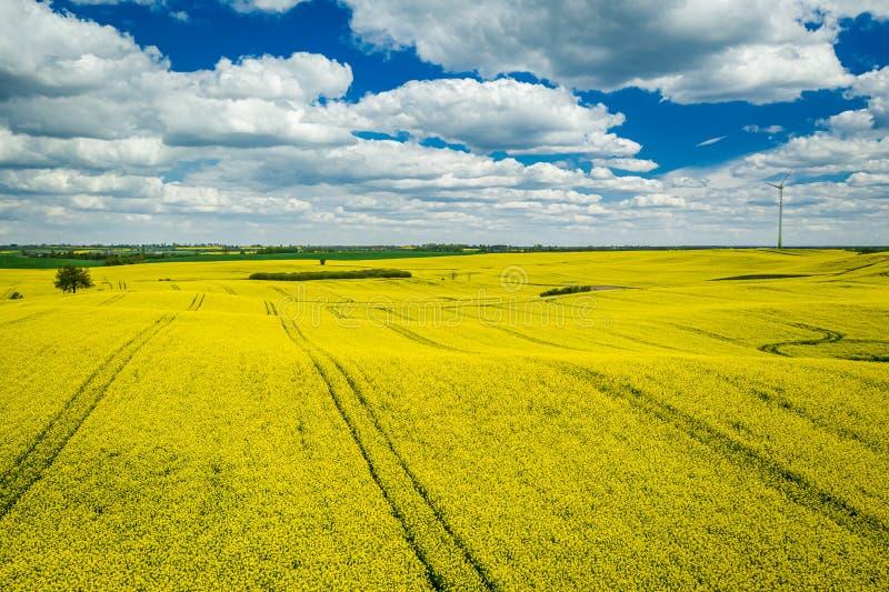 Campos amarelos com céu azul, vista aérea da violação do Polônia imagem de stock