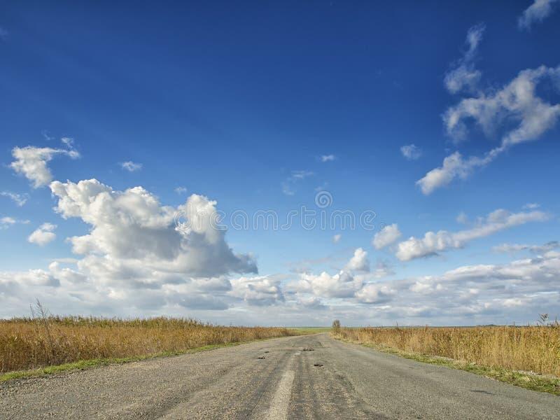 Campos amarelos sob um céu azul dramático com as nuvens brancas próximas a colônia do grego clássico de Histria, nas costas do Ma imagem de stock royalty free