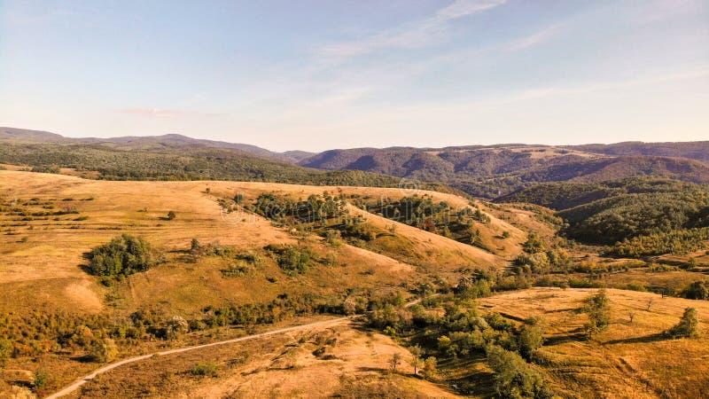 Campos amarillos en Rumania foto de archivo