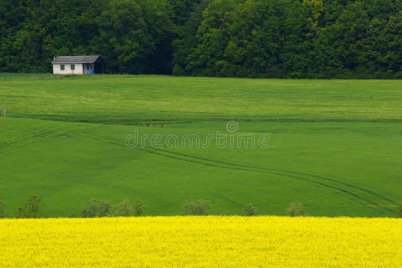 Campos amarillos y verdes fotografía de archivo