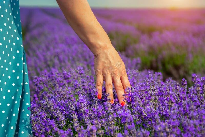 Campos bonitos da alfazema em um dia ensolarado A menina condu-la ceder a alfazema moldova imagens de stock