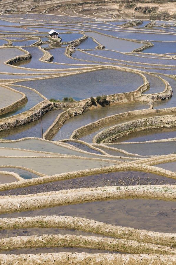 Campos colgantes de Yuanyang imagen de archivo