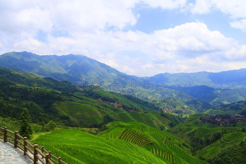 Campos colgantes verdes, terraza a lo largo de las montañas foto de archivo