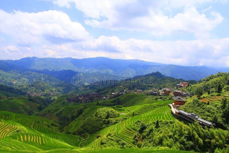 Campos colgantes verdes, terraza a lo largo de las montañas imagen de archivo