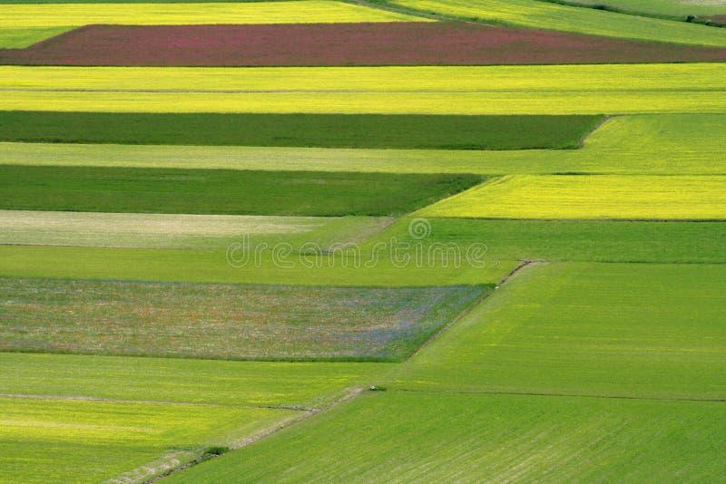 Campos coloridos fotografia de stock