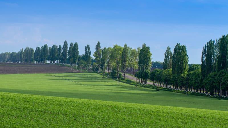 Campos com trigo verde sob uma paisagem do céu azul imagens de stock