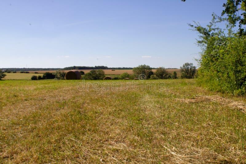 Campos cultivados de la hierba en el campo francés foto de archivo libre de regalías
