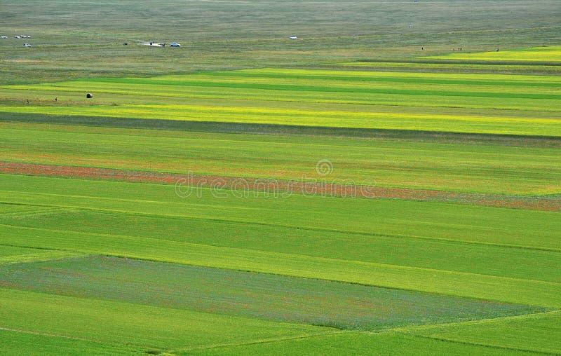 Campos cultivados e floridos de Castelluccio di Norcia foto de stock