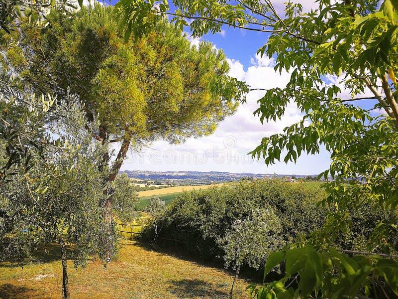 Campos cultivados en las colinas de la región de Marche en el mar adriático, Italia fotografía de archivo
