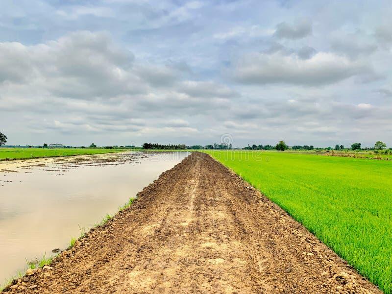Campos da água, da estrada de terra e do arroz imagens de stock