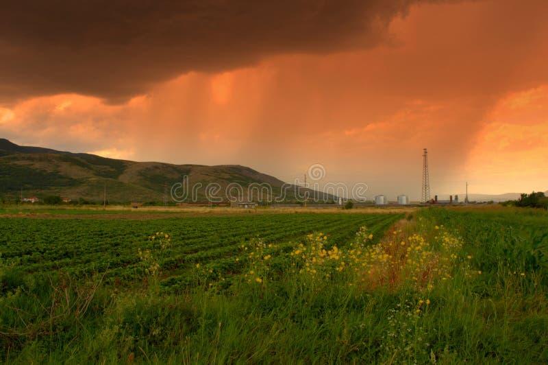 Campos da chuva do verão fotografia de stock