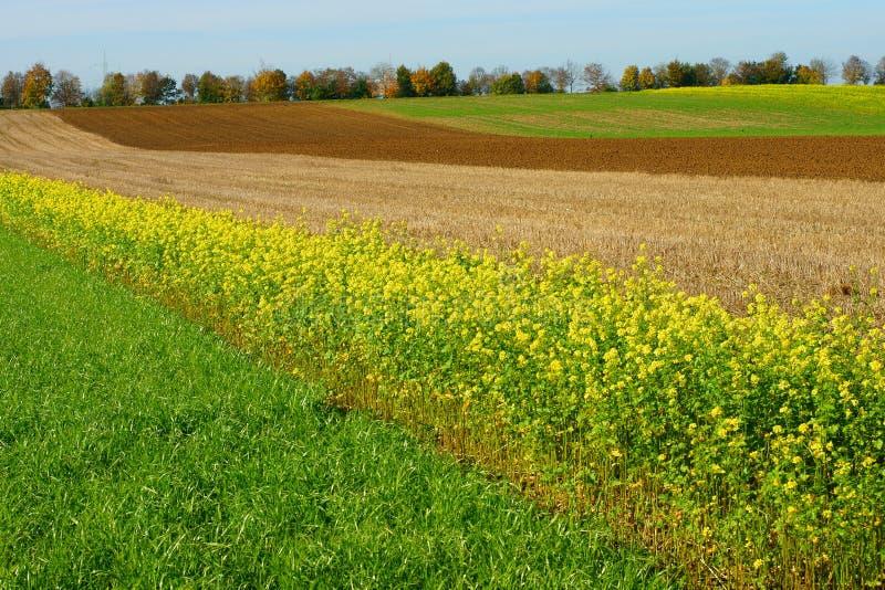 Campos da rotação de colheita imagem de stock