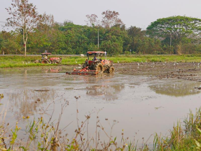 Campos de arroz de arado usando los tractores por la tarde caliente en una zona rural en el norte de Tailandia fotografía de archivo libre de regalías