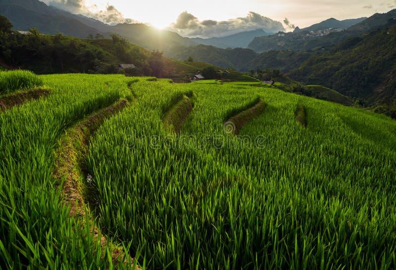 Campos de arroz en terraza de Mu Cang Chai, YenBai, Vietnam Campos de arroz preparan la cosecha en el noroeste de Vietnam fotos de archivo libres de regalías