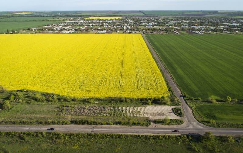 Campos de colza amarelos e verdes, vista aérea ? carros vão na estrada À distância está a aldeia imagem de stock royalty free