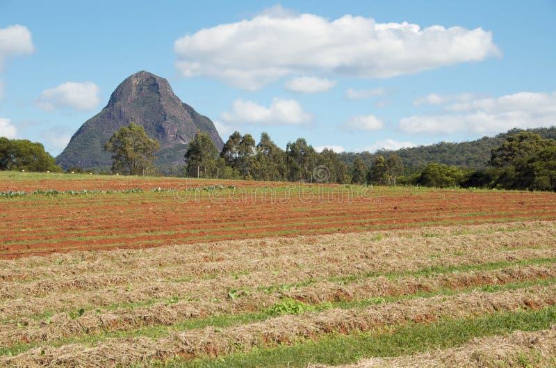 Campos de exploração agrícola orgânicos fotografia de stock royalty free