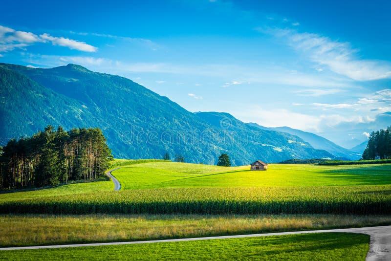 Campos de Fietch em Sonnenplateau, Áustria fotos de stock royalty free