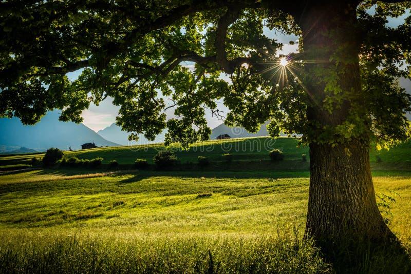 Campos de Fietch em Sonnenplateau, ?ustria fotos de stock royalty free