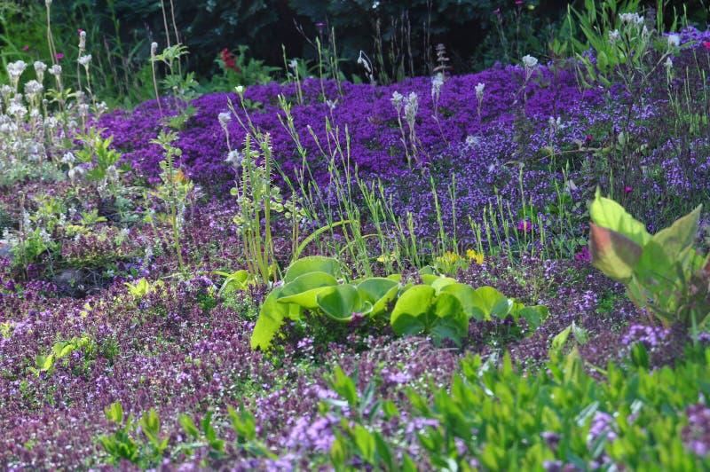 Campos de flor fotos de stock royalty free