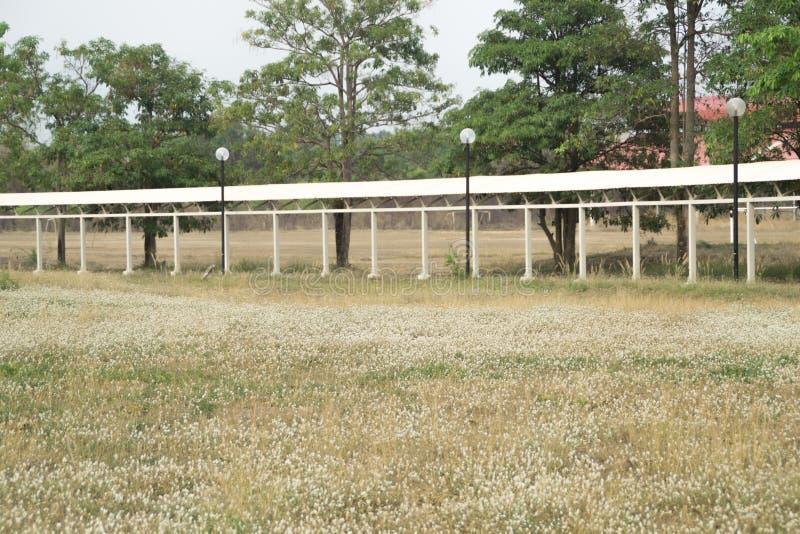 campos de flor da grama imagem de stock royalty free