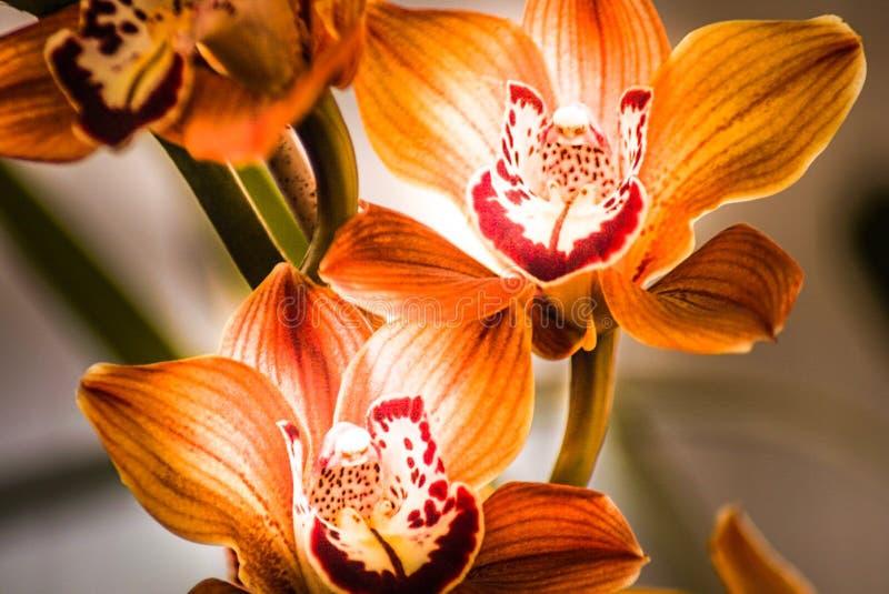 Campos de flor em Carlsbad imagens de stock