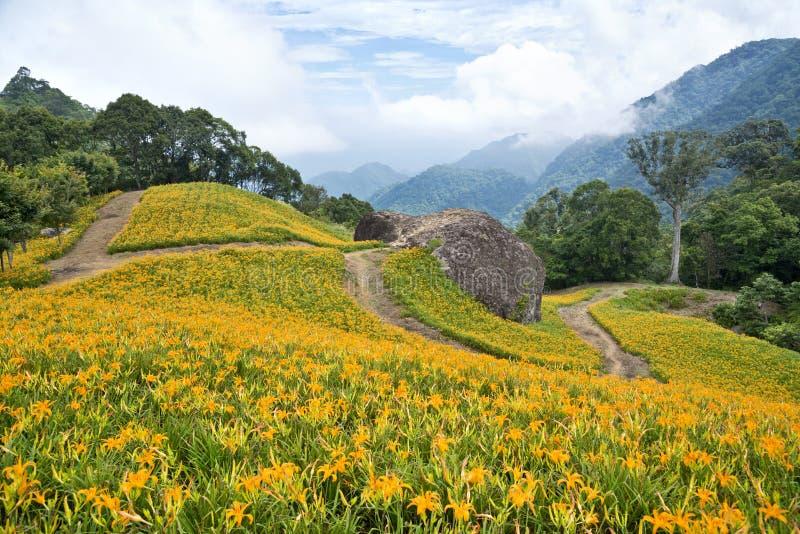 Campos de flor hermosos del lirio en Hualien, Taiwán fotos de archivo