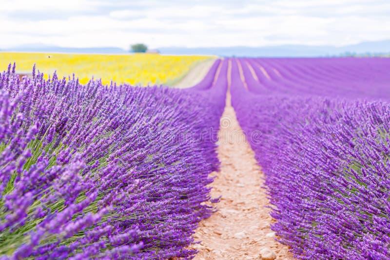 Campos de florescência da alfazema e do girassol em Provence, França imagens de stock royalty free