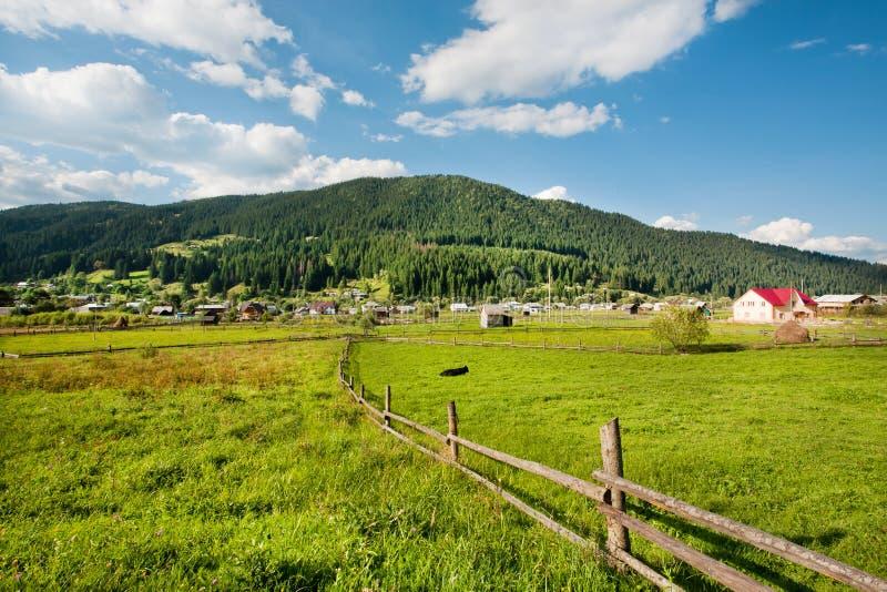 Campos de grama verde na vila com as casas imagens de stock